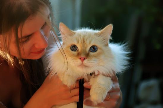 Про кошек - Страница 3 141876--46504408-m549x500-u23a04