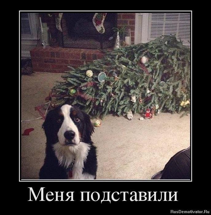 Пес по имени Егор - Страница 18 141876-62ca8-62417319-m750x740-u7c16b