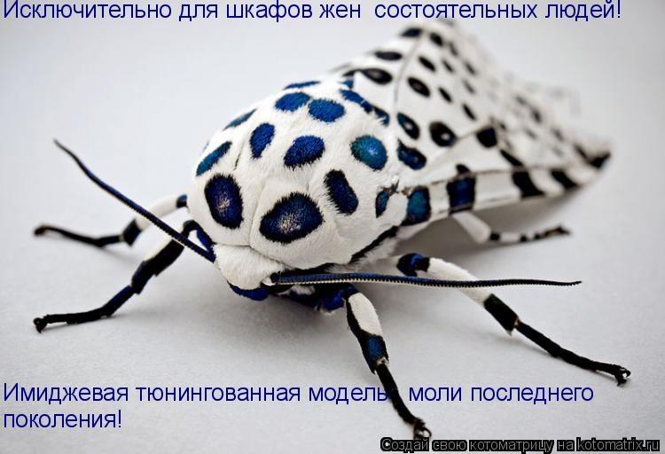 Обои Леопардовая моль: Насекомое, белое, Моль, Насекомые, картинки, фото.