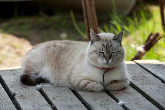 Про кошек - Страница 4 234763--46423375-m549x500-u6c5c5