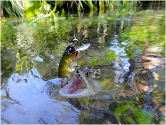 рыбалка на форель спиннингом
