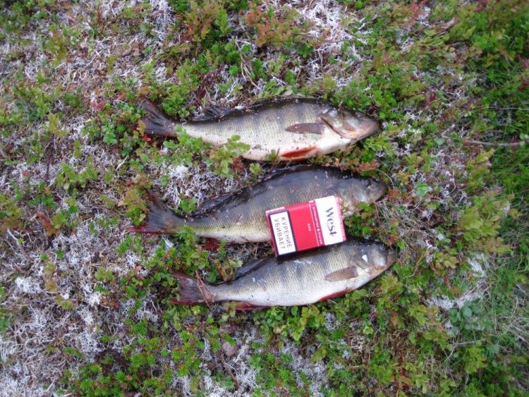 рыбалка в мурманской области в августе